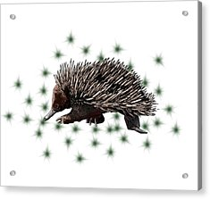 E Is For Echidna Acrylic Print