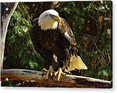 Eagle Alert Acrylic Print