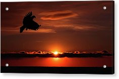 Eagle In A Red Sky Acrylic Print