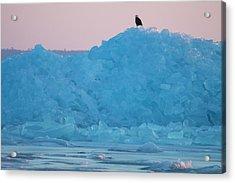 Eagle On Ice Mackinaw City 2261803 Acrylic Print