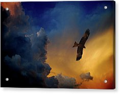 Eagle Over The Top Acrylic Print by Gopan G Nair