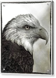 Eagle Protrait Acrylic Print