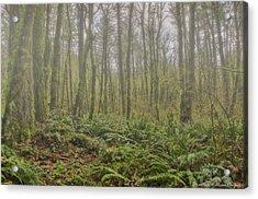 Early Autumn Fog Acrylic Print
