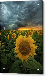 Acrylic Print featuring the photograph Eccentric  by Aaron J Groen