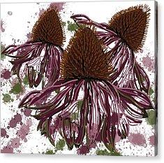Echinacea Flowers Line Acrylic Print