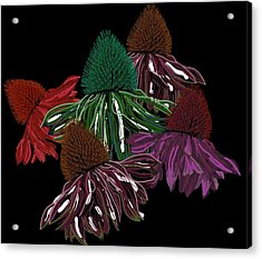 Echinacea Flowers With Black Acrylic Print