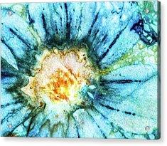 Eco Dyed Cosmos Acrylic Print