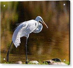 Egret Yoga Acrylic Print
