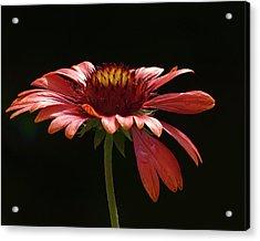 Elegant Glow Acrylic Print