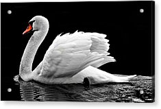 Acrylic Print featuring the photograph Elegant Swan by Top Wallpapers