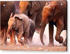 Elephant Herd On The Run In Etosha Acrylic Print