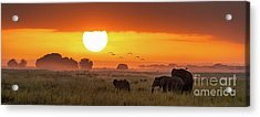 Elephants At Sunrise In Amboseli, Horizonal Banner Acrylic Print