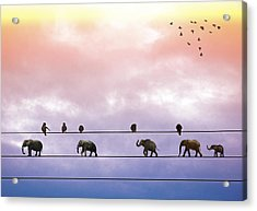 Elephants On The Wires Acrylic Print