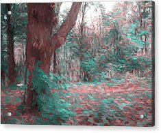 Emmaus Community Park Trail With Large Tree Acrylic Print