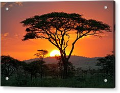 End Of A Safari-day In The Serengeti Acrylic Print by Guenterguni
