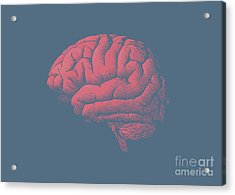 Engraving Brain Illustration With Tint Acrylic Print