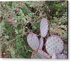 Acrylic Print featuring the photograph Ensconced Prickly Pear 5 by Lynda Lehmann