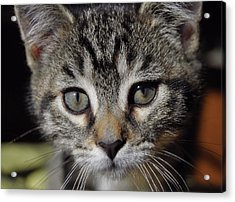 Esme Acrylic Print by JAMART Photography