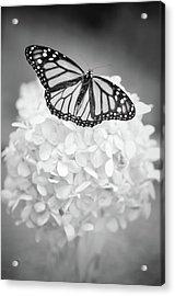 Essence Acrylic Print