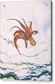 European Octopus Acrylic Print