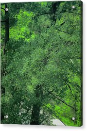 Ever Green Acrylic Print