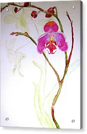 Exotic Dancer Acrylic Print