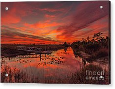 Explosive Sunset At Pine Glades Acrylic Print