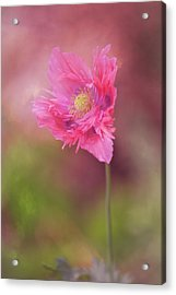 Acrylic Print featuring the photograph Exquisite Appeal by Dale Kincaid
