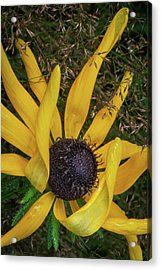 Acrylic Print featuring the photograph Extraordinary by Dale Kincaid