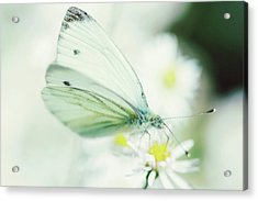 Extreme Close Up Of White Butterfly & Acrylic Print by Les Hirondelles Photography