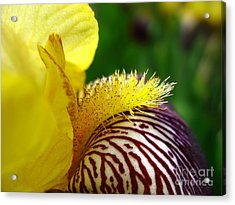 Extreme Close Up Of Yellow And Vinous Acrylic Print