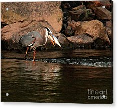 Acrylic Print featuring the photograph Eye To Eye by Debbie Stahre