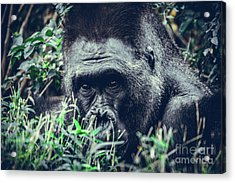 Eyes Speak Acrylic Print