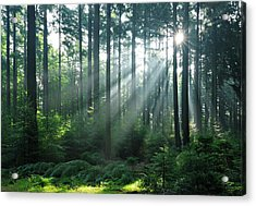 Fairytale Forest - Sunbeams In Natural Acrylic Print by Avtg