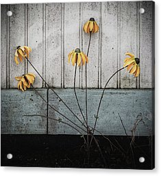 Fake Wilted Flowers Acrylic Print