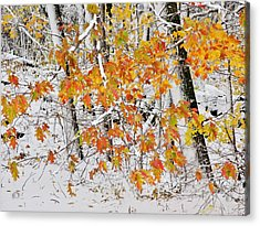 Fall And Snow Acrylic Print