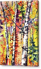 Fall Aspen Colors Acrylic Print