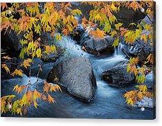 Fall Colors At Slide Rock Arizona Acrylic Print