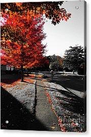 Fiery Fall Trees, Part 1 Acrylic Print by JMerrickMedia