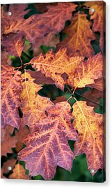 Acrylic Print featuring the photograph Fall Flames by Whitney Goodey
