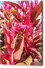 Acrylic Print featuring the photograph Fall Floral Bouquet  by Rachel Hannah
