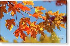 Fall Foliage Acrylic Print