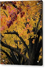 Fall In Carlyle Acrylic Print