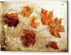 Acrylic Print featuring the photograph Fall Keepers by Randi Grace Nilsberg