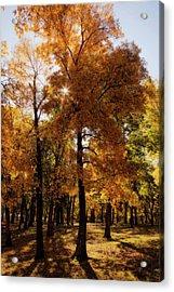 Acrylic Print featuring the photograph Fall Sunshine by Scott Bean