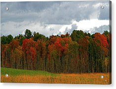 Fall Trees Off Rte 23a Acrylic Print