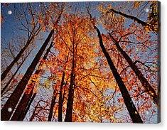 Fall Trees Sky Acrylic Print
