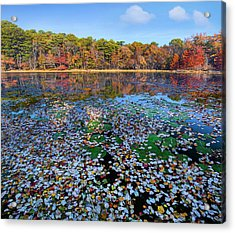 Fallen Leaves On Lake, Daingerfield Acrylic Print