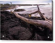 Fallen Tree At Punalu'u Beach Acrylic Print