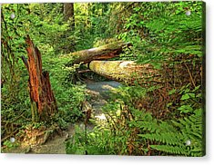 Fallen Trees In The Hoh Rain Forest Acrylic Print